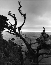 whalers_cove_point_lobos